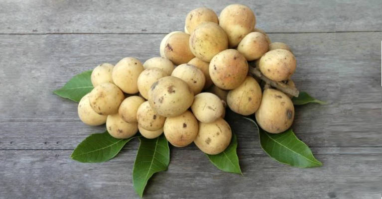 Lanzones - Tropical Fruit with Many Health Benefits