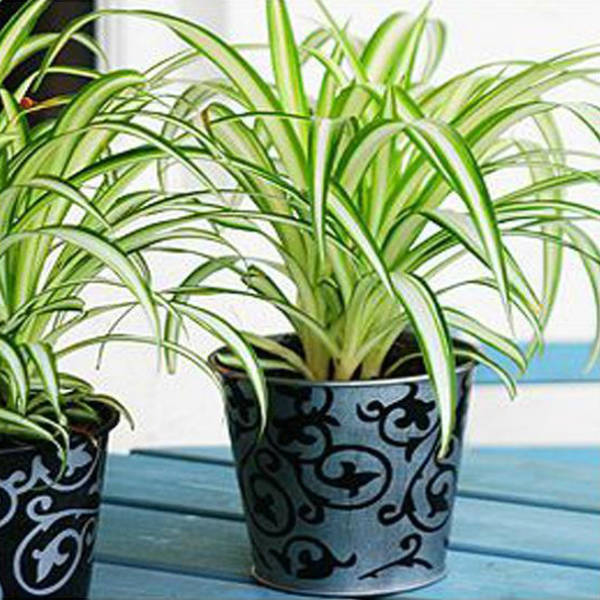 The best 5 bedroom plants to get rid of stress and sleep for Pianta ornamentale con foglie rosse e verdi