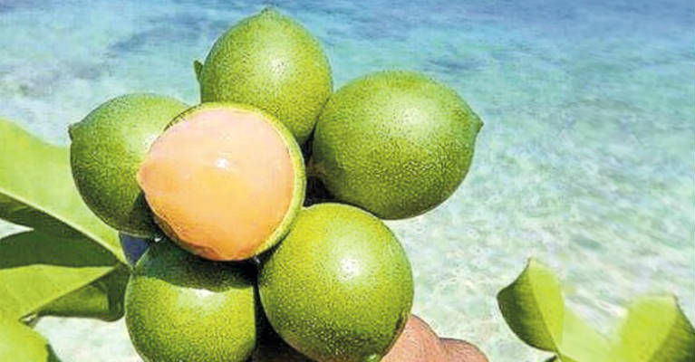 10 Healthy Reasons for You to Eat Spanish Lime Fruit (Quenepa)