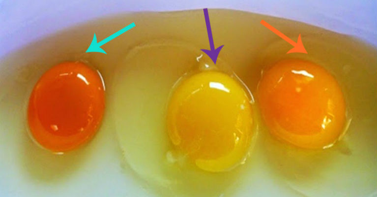 Healthy Eggs - How to Tell If Your Eggs Came from a Sick Chicken