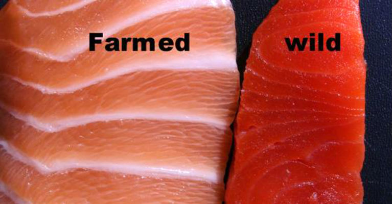 Farmed Salmon Is FULL Of Antibiotics and Mercury! Here's How To Tell If Your Salmon Is Safe