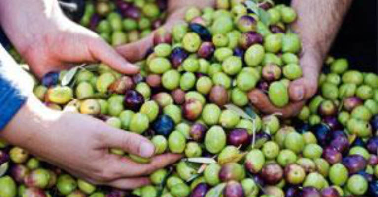 The Many Benefits of Olives to Your Overall Health
