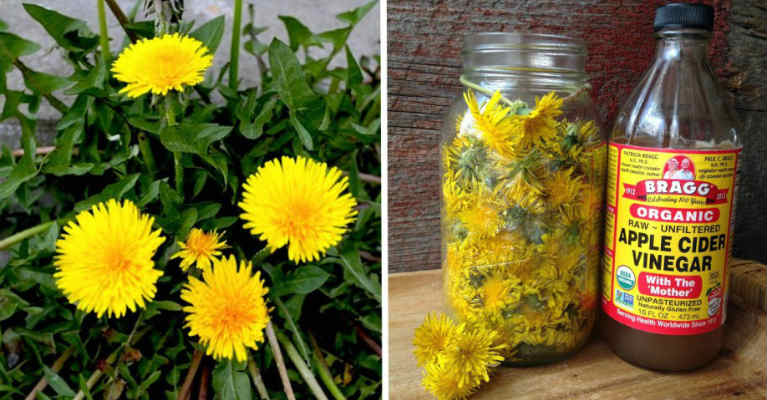 24 Little-Known Uses for Dandelions From Baking and Pain Relief to Quickly Removing Warts