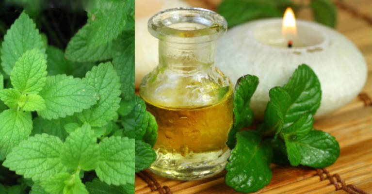 How To Use Peppermint Essential Oil For Hair Growth