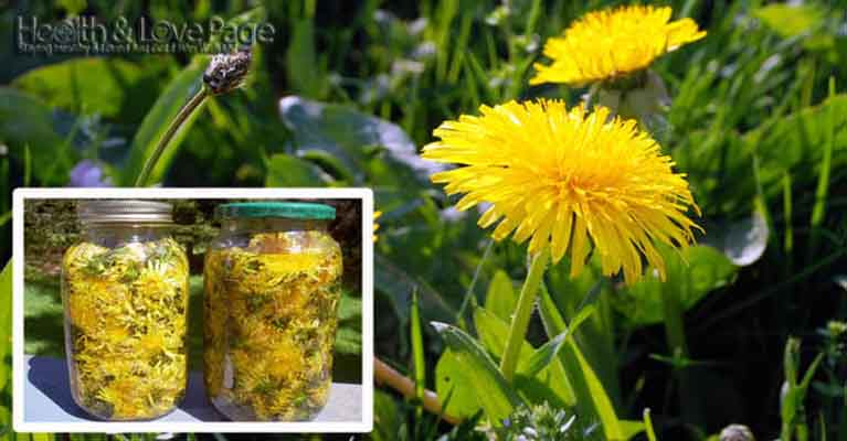 A Dandelion Cures Cancer, Hepatitis, Liver, Kidneys, Stomach … Here's How To Prepare