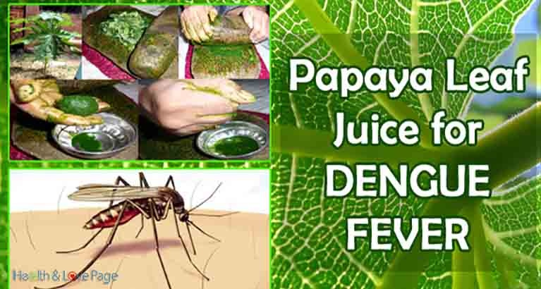 How to Make Papaya Leaf Juice To Get Rid of Dengue Fever in 48 Hours