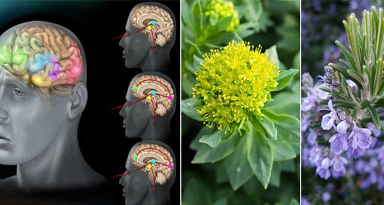 Anxiety Makes You Fat, Sick and Depressed…Here Are 10 Herbs That Work Better Than Drugs