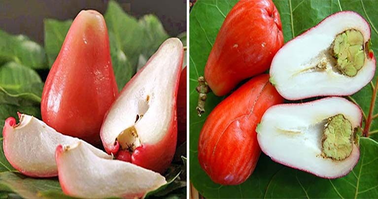 8 Things About Rose Apples You Can't Afford to Miss