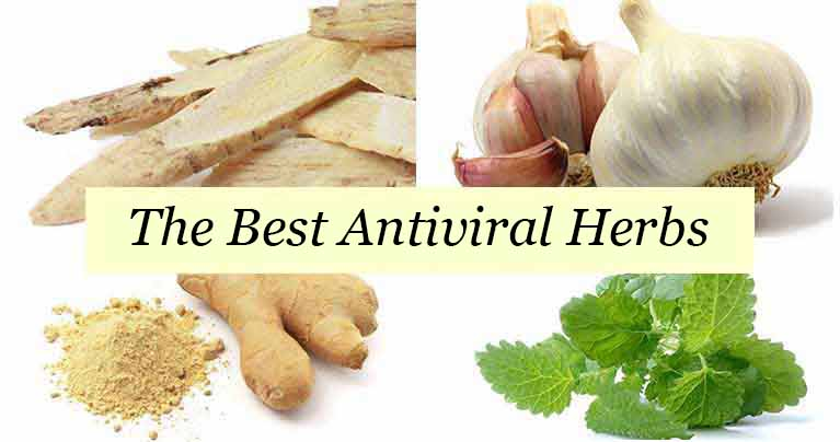 These 4 Herbs are More Effective in Fighting Viruses than Medication