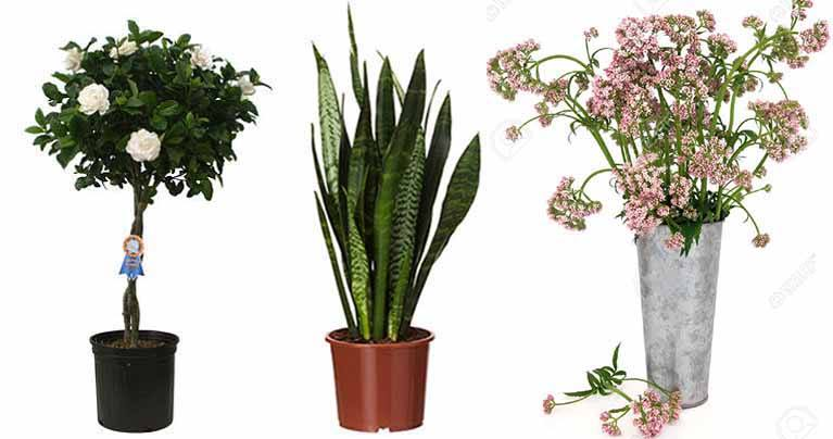 These 7 Houseplants Can Relieve Stress, Asthma, Allergies, Insomnia, and More